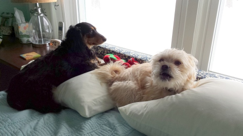 Is that woman every going to take us outside for a walk again? Bitch.