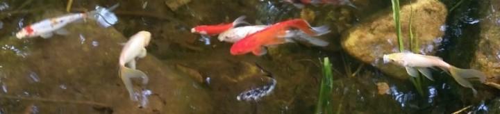 fish horizontal crop